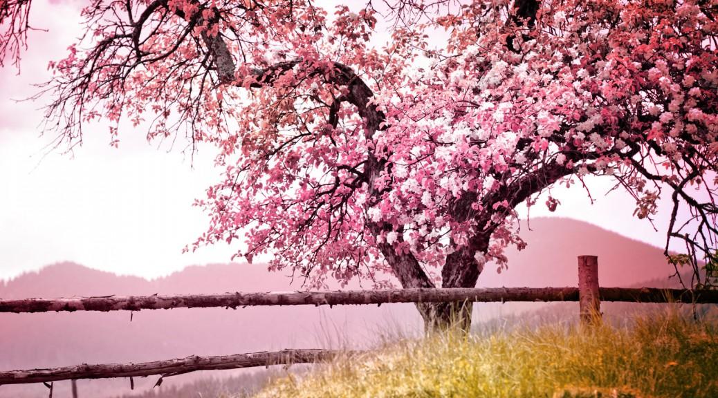 6 Orte für eine traumhafte Hochzeit im Frühling